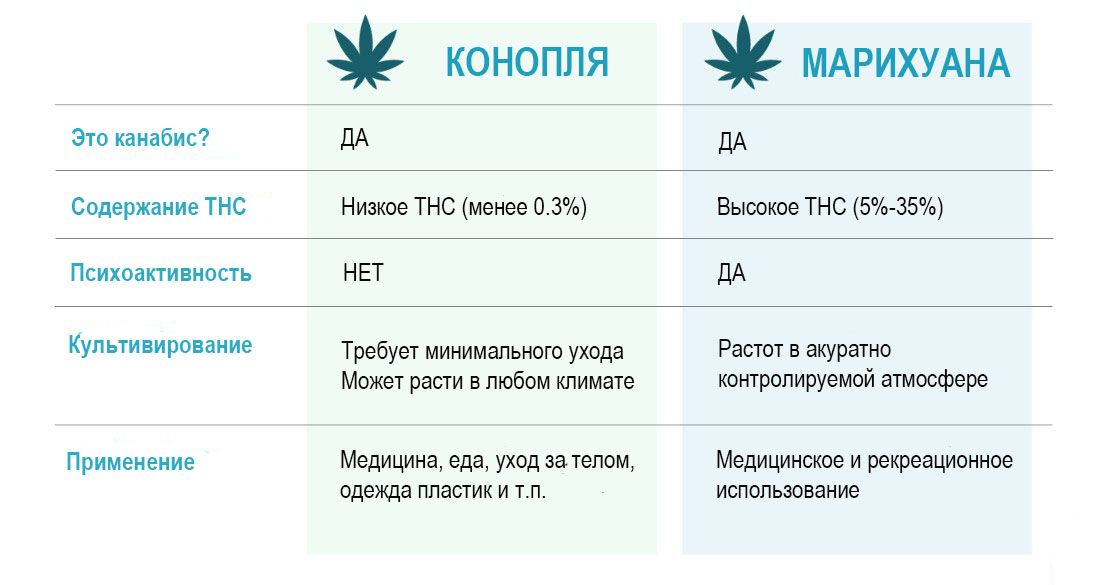 Hemp-vs-Marihuana