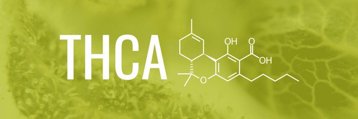 THCA-Tetrahydrocannabinolic-acid