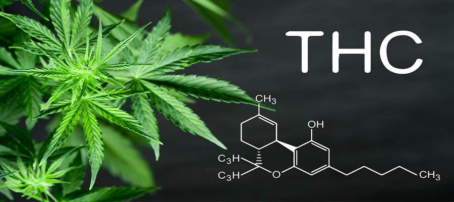 THC_Tetrahydrocannabinol