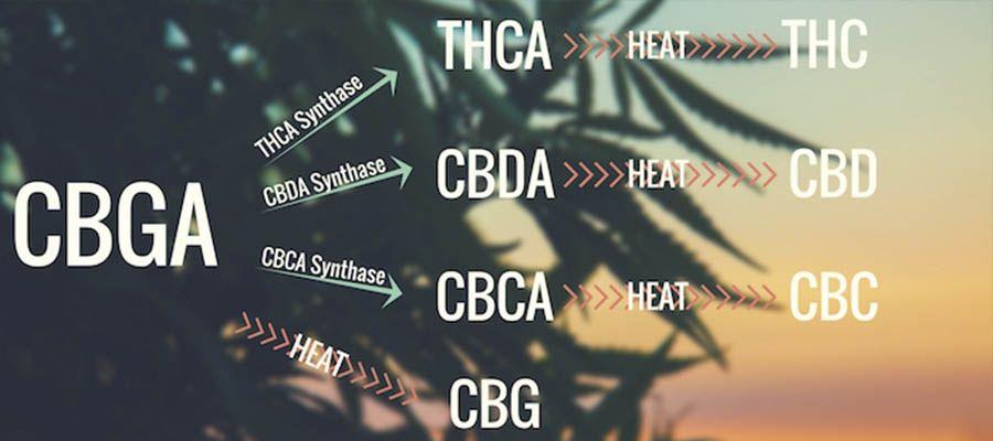 cbga-conversion