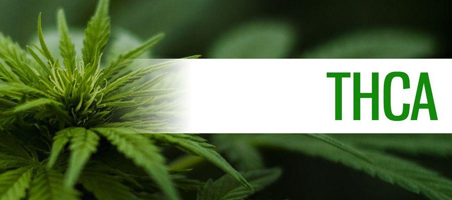 thca_tetrahydrocannabinolic_acid